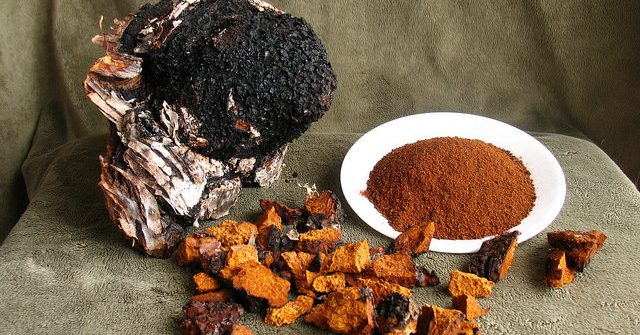 Chaga in 3 forms